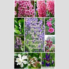 Top 10 Scented Plants That Will Make Your Garden A