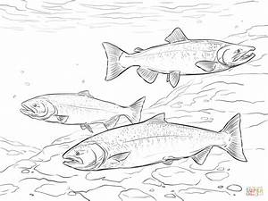 Chinook Salmon coloring page Free Printable Coloring Pages