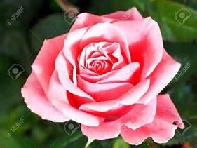 Résultat d'images pour fleurs