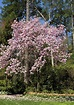 Companions For Magnolia Trees - Learn About Plants ...