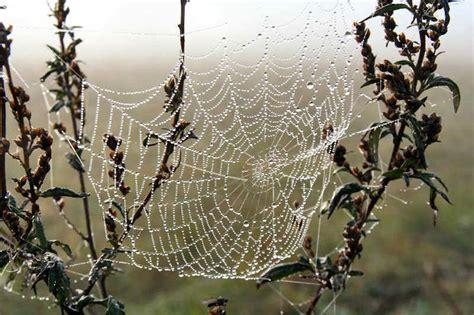 la toile d araignee de la toile d araignee et des etirements dans le qi gong 183 mouvements