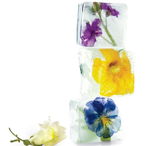 Floral Ice Cubes  Martha Stewart