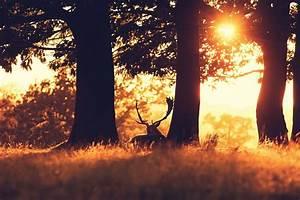 photography, , field, , grass, , trees, , plants, , sunlight, , animals, , deer, wallpapers, hd, , , , desktop, and