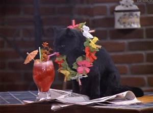 Salem Saberhagen the talking cat in 'Sabrina The Teenage ...