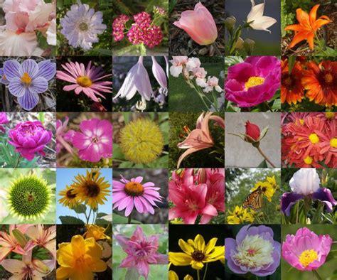 fiori nome nome di fiori per mazzi di fiori fiorire composizione al