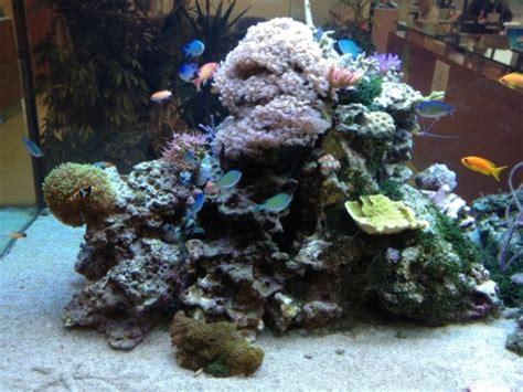suivi d un aquarium peu ordinaire 200 centim 232 tres de