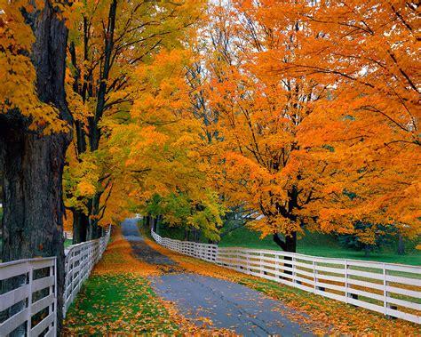 fall colors trees fabulous fall defining hope