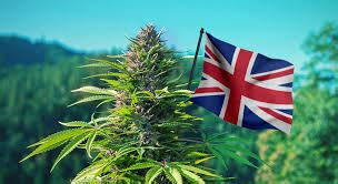 londonweednet top london uk ireland scotland