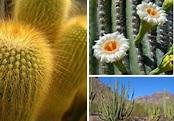 11 best desert ecosystem images on Pinterest | Desert ...