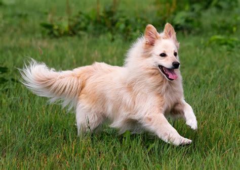 popular dog breeds     decline