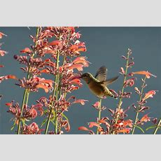 Essential Plants For A Great Butterfly Garden  Gardenerd