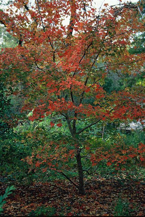 plant small native trees  beauty   birds
