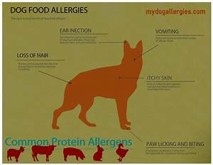 42 best images about dog allergies on pinterest for dogs With dog food allergy symptoms