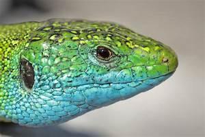 Grün Und Blau : gr n und blau foto bild tiere wildlife amphibien reptilien bilder auf fotocommunity ~ Udekor.club Haus und Dekorationen