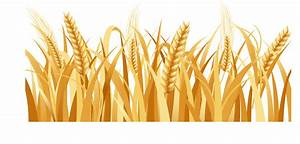 Collection Of Free Farm Vector Wheat  Download On Ui Ex