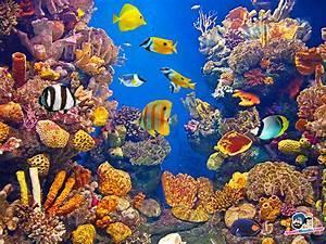 Aquatic - Biomes  Aquatic