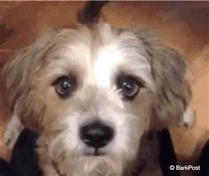Puppyeyes GIFs - Find & Share on GIPHY