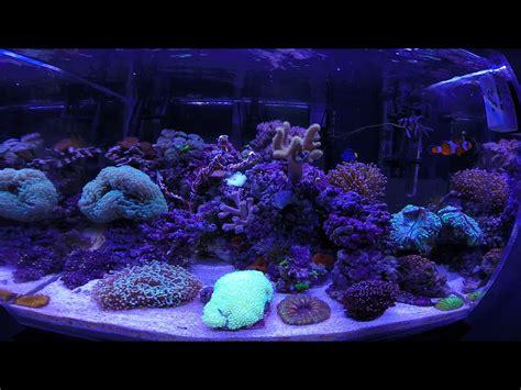 bedroom tank tank bedroom aquarium