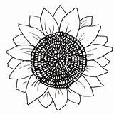 Sunflower Coloring Pages Printable Flower Flowers Sunflowers Head Patterns Cut Para Trace sketch template