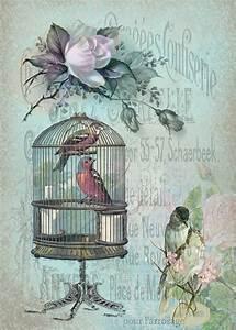 Birds blue. | Клетки с птичками | Pinterest
