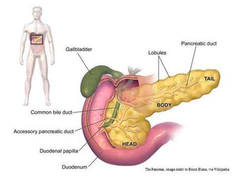 foods  healthy pancreas  prevent reverse