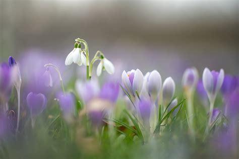 Šonedēļ sāksies astronomiskais pavasaris - Sabiedrība ...
