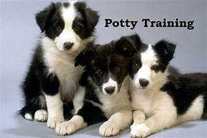border collie how to potty train a border collie border With potty train your dog fast