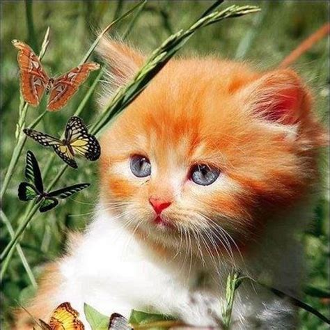 Butterfly Loving Cat Saved From Mamietitine Center Blog