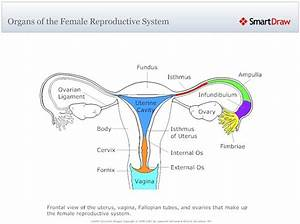 [internal organ diagram male reproductive] mstinsonbc 3 3 ...