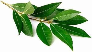 Народные средства лечения остеохондроза лавровый лист