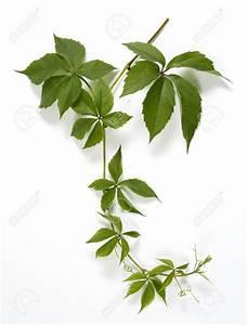 Plante Intérieur Grimpante : plante grimpante florideeo ~ Louise-bijoux.com Idées de Décoration