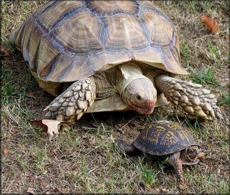 box turtle box turtle animal wildlife