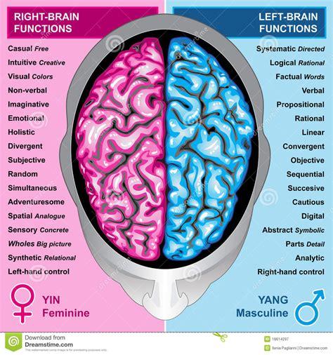 brain test italiano human brain left and right functions stock illustration