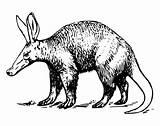 Aardvark Coloring Pages Printable Animals Animal Alphabet Sheet Drawn Visit sketch template
