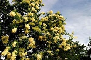 Baum Mit Weißen Blüten : regionalia www regionalia deutschland wei e bl ten ~ Michelbontemps.com Haus und Dekorationen