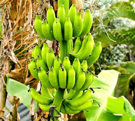 Natürlich Gesund: Banane - Inhaltsstoffe