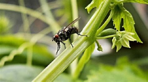 faire fuir les mouches le truc pour se d 233 barrasser efficacement des mouches dans
