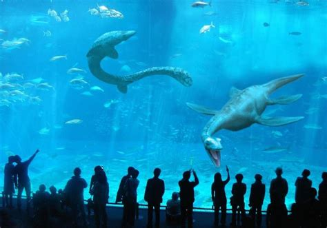 New Monterey Bay Aquarium exhibit | Plesiosaurs,pliosaurs ...
