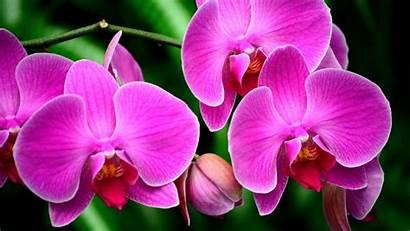 Orchid Flower Pink Macro 4k Flowers Wallpapers