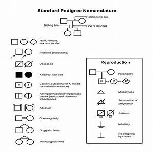 Pedigree Chart Symbols Used 3 2 8 Perform An Investigation To Construct Pedigrees Or
