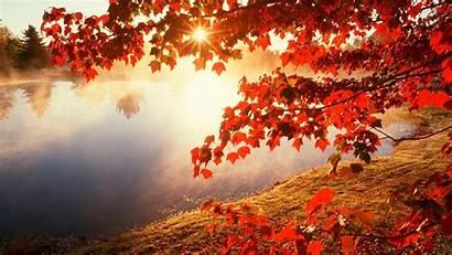 Leaves Autumn Wallpapers Fall Desktop Foliage Colors