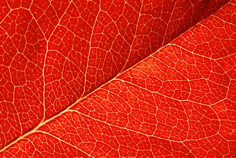 Red Leaf Texture Background Gallery Yopriceville High