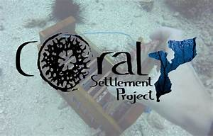 Coral Settlement Project In Mozambique