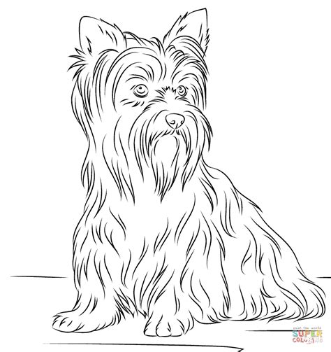 yorkshire terrier coloring page  printable coloring