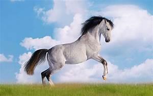 Oversized galloping horses Wallpaper 11 - Animal ...