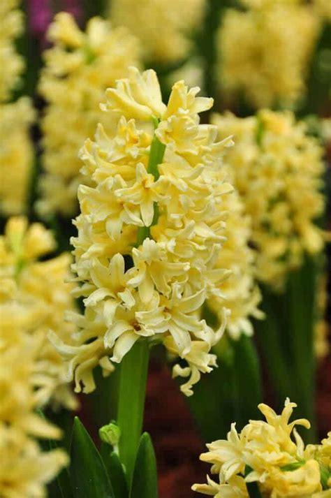 types  yellow flowers      info