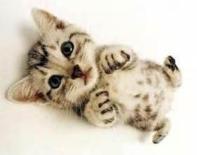 baby cats for top 30 most cutest baby cat pictures cutest cats