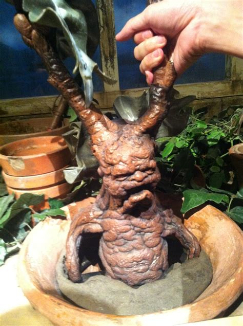 potter plant 72 best images about harry potter mandrake ideas on pinterest name labels the plant and harry