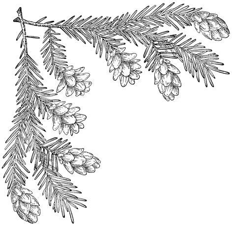 pine cone corner upper left clipart