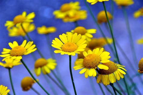 wespen bloemen kleurrijke bloemen en insecten vrijspraak